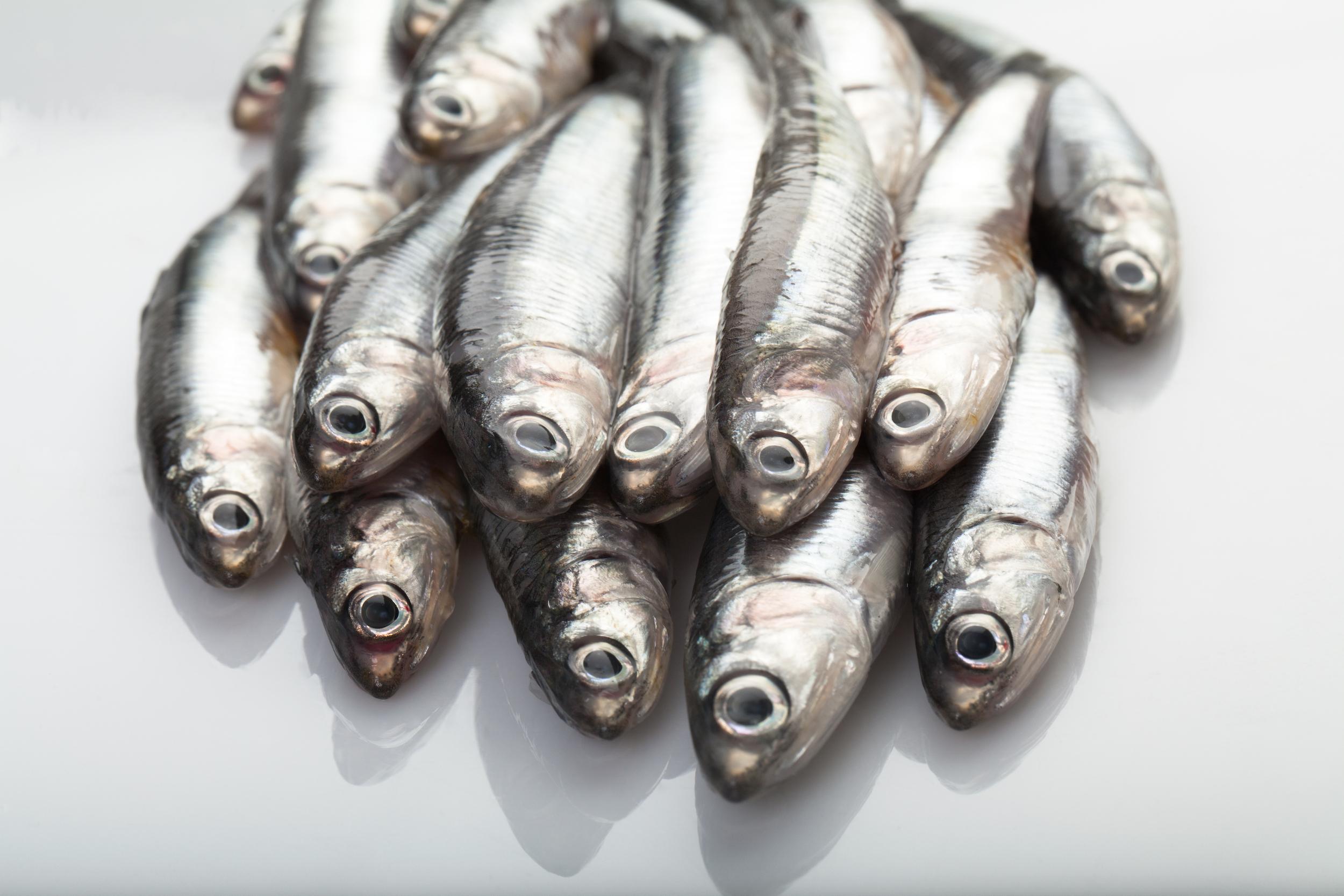 bouquet sardines
